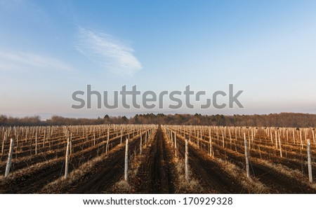 grape field on winter from Bulgaria - stock photo