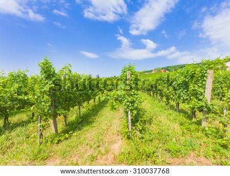 Grape fields on Hungarian hills from Villany against beautiful blue sky. - stock photo