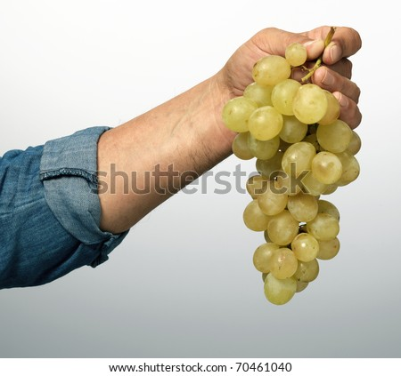 grape in hand - stock photo