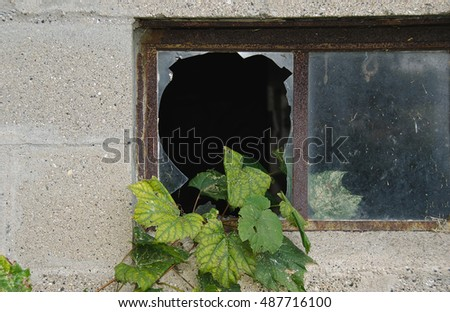 grape ivy growing in broken window