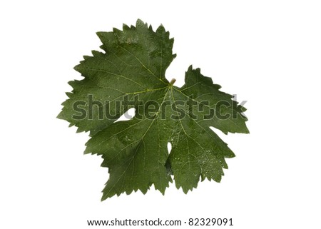 grape leaf  on white background