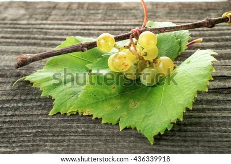 grape leaves - stock photo