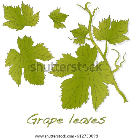 Grape leaves isolated on white.