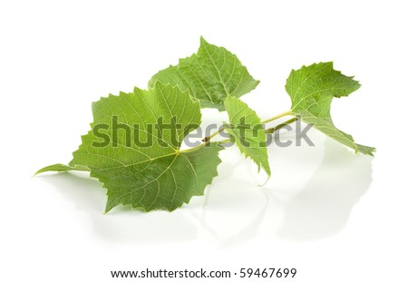 Grape leaves isolated on white background - stock photo