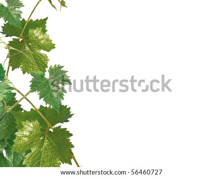 Grape leaves on a white background - stock photo