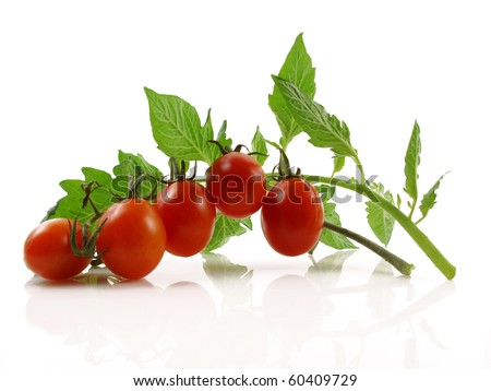 Grape or cherry tomato branch with leaves on white - stock photo