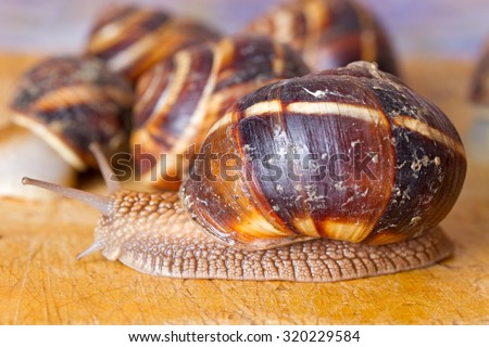 Grape snail on a wooden surface
