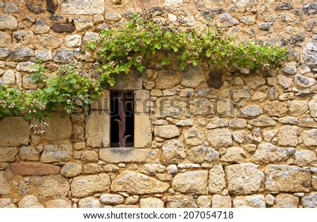 Grape vine growing along the side of an old brick wall with a small window