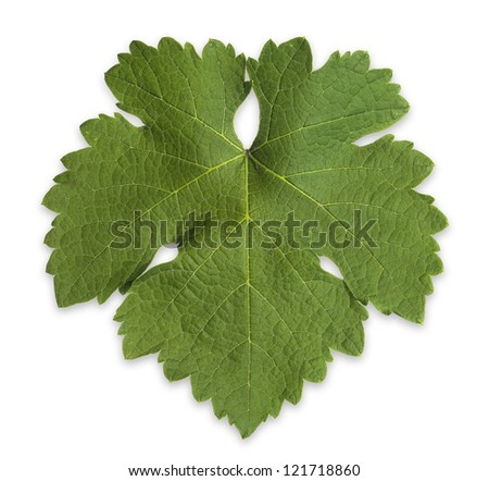 Grape Vine Leaf - stock photo