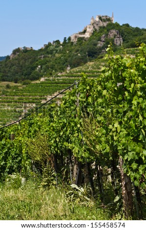 Grape-vines with irrigation system, in the background terraced vineyards and the ruins of Durnstein medieval castle, Wachau, Lower Austria - stock photo