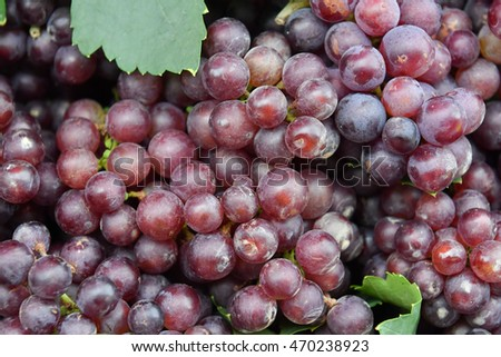 Grape wine background.
