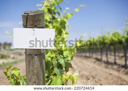Grape Wine Vineyard with Wooden Post Holding Blank Sign Ready for Your Own Text. - stock photo