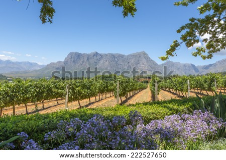 Grape wineland countryside landscape background of hills with mountain backdrop in Cape Town South Africa - stock photo