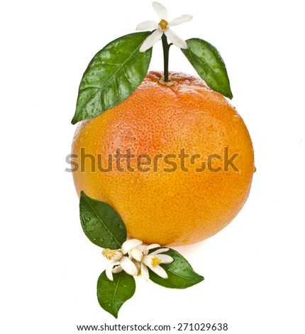 grapefruit flowering with leaves close up isolated on white background - stock photo