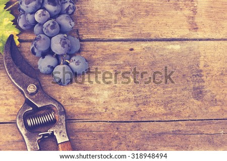 Grapes and grape scissors on a wooden rustic background - applied vintage, retro effect - stock photo