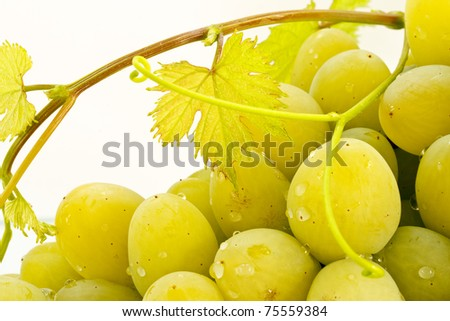grapes closeup on white background