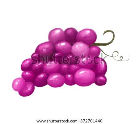 grapes illustration - stock photo