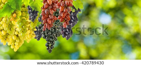 grapes on a green background close up - stock photo