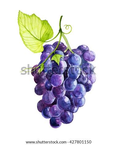 grapes watercolor - stock photo