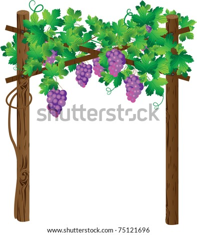 Grapevine on a wooden support
