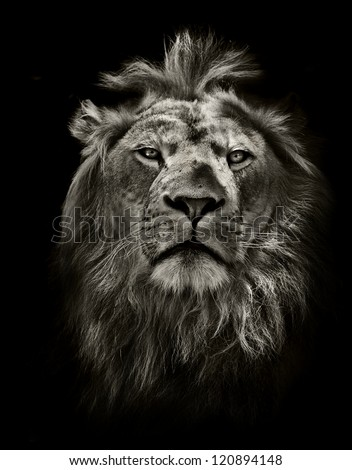 graphic black and white lion portrait on black - stock photo