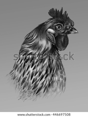 Graphic drawing. Detailed chicken head in profile on a gray background. - stock photo