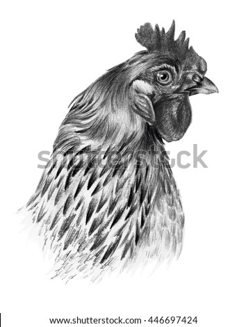 Graphic drawing. Detailed chicken head in profile on a white background. - stock photo