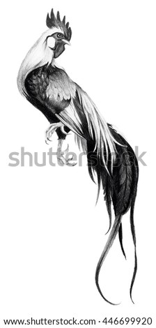 Graphic drawing with watercolor pencils. Rooster on a white background. - stock photo