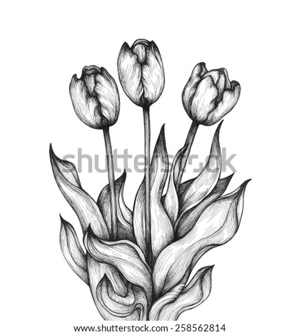 graphic illustration of tulip on a white background hand drawn artwork love concept for