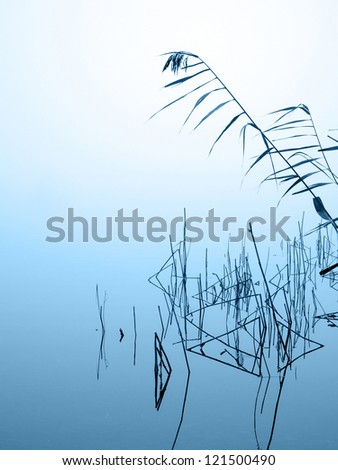 graphical reed reflecting in the water on a misty winter day - stock photo