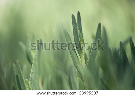 gras - stock photo