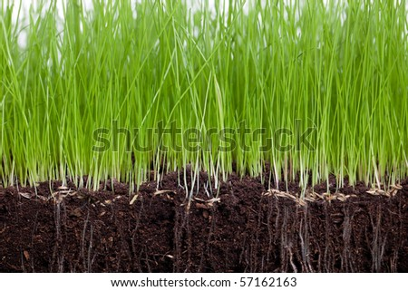 Gras and Soil - stock photo