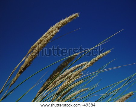 grass against blue sky - stock photo