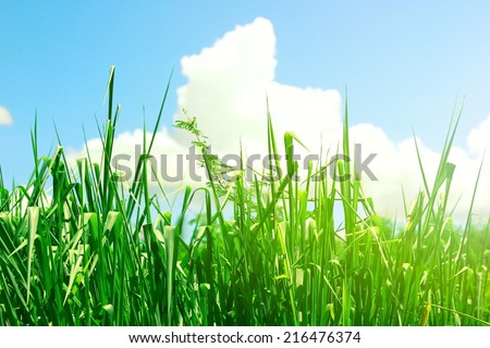 Grass and Clouds - stock photo