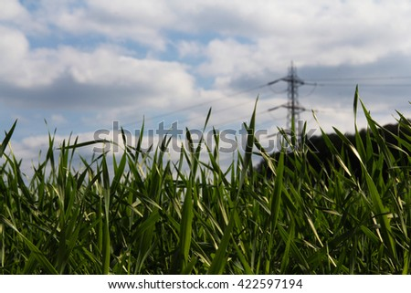 Grass and cloudy sky from low down