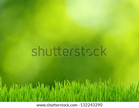grass and defocused green background - stock photo
