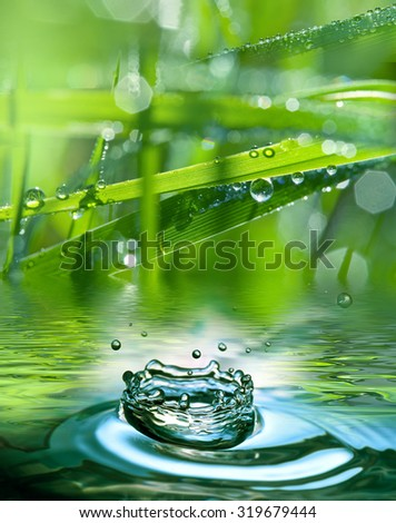 grass and dew drops - macro photography - stock photo