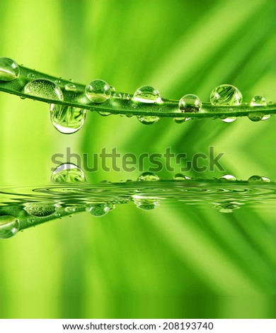 grass and drops - stock photo