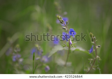 grass and flower field under the morning sunlight,