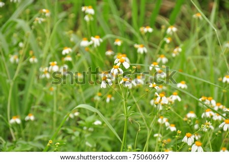 Grass and grass flowers background Beautiful flowers and grass in nature. On a sunny day