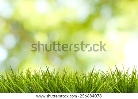 Grass and green nature blurred background