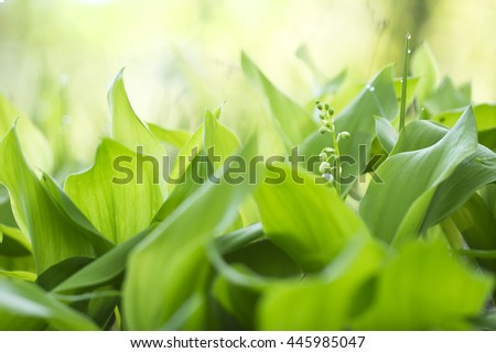 grass and lily of the valley leaves in the morning dew green colorful spring background