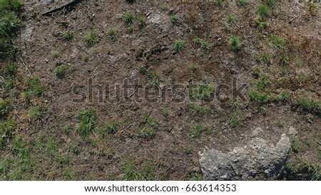 Grass and Mud Texture