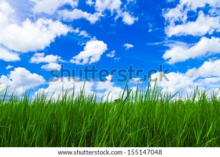 grass and sky.Nature background - stock photo