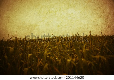Grass and sky. Sunny spring day. - stock photo
