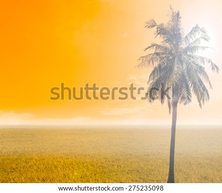 grass and sky with coconut tree in orange tone - stock photo
