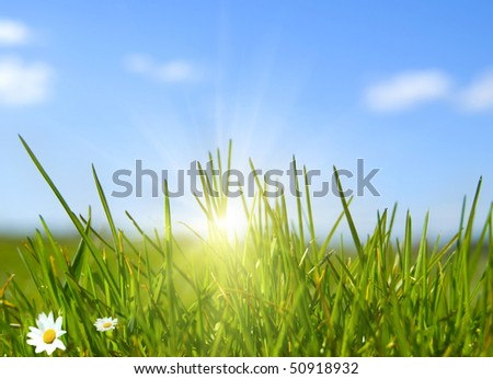 Grass and the sun