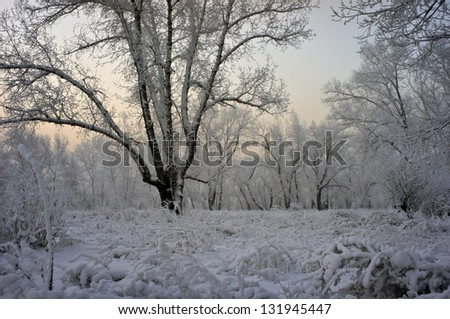 Grass and trees covered with a thick layer of snow and frost