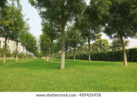 grass and trees in the park