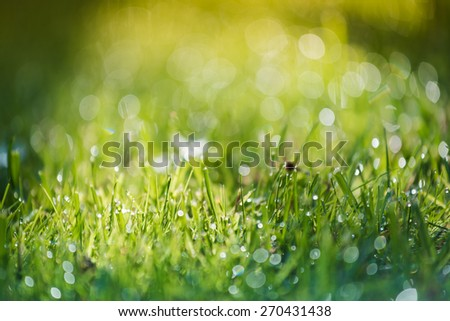 grass and water in small depth of field intentionally - stock photo